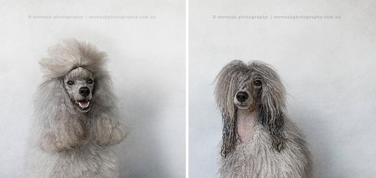 animal-portraits-dry-wet-dog-serenah-hodson-11