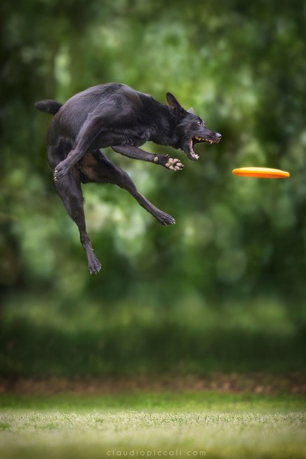 dogs-can-fly-14__880