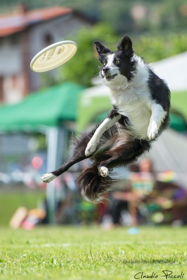 dogs-can-fly-16__880