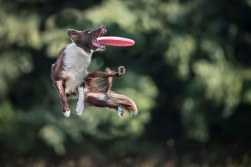 dogs-can-fly-24__880
