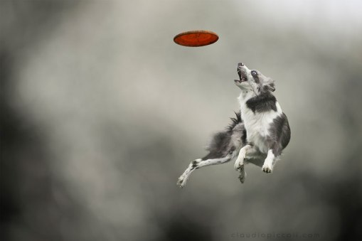 dogs-can-fly-25__880